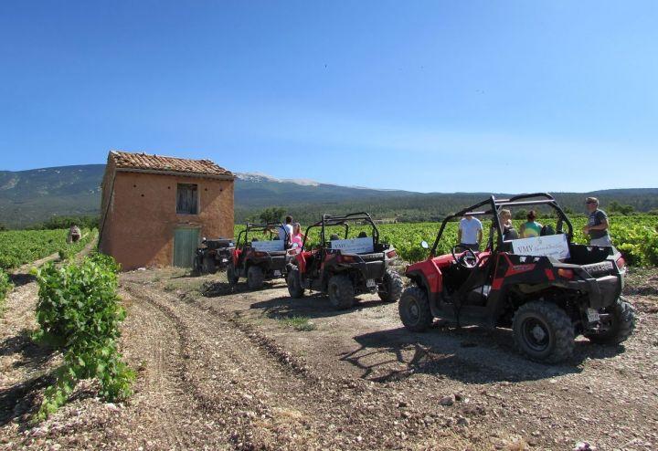 Découverte des vignobles du Mont Ventoux